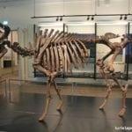 Visitando o Museu Nacional da Dinamarca – o Nationalmuseet