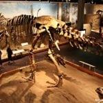 Seguindo os dinossauros do Canadá – Royal Tyrrel Museum